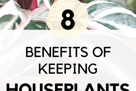 8 Benefits of Keeping Houseplants