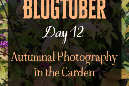 Blogtober Day 12 - Autumnal Photography in the Garden
