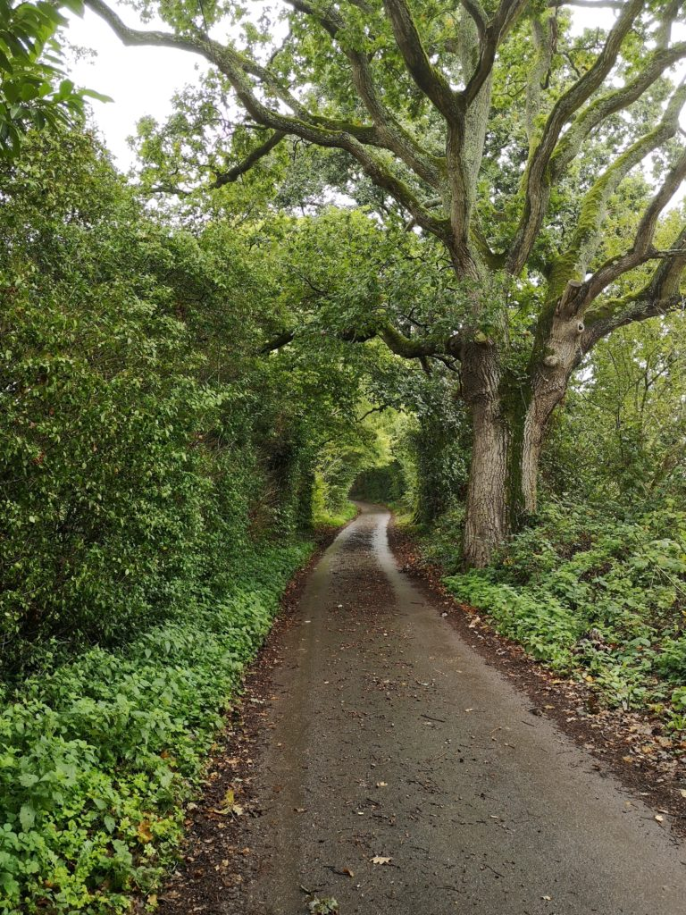 A country lane lined with green bushes and trees