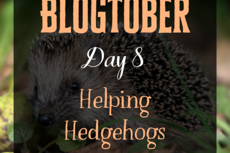 Blogtober Day 8 - Helping Hedgehogs