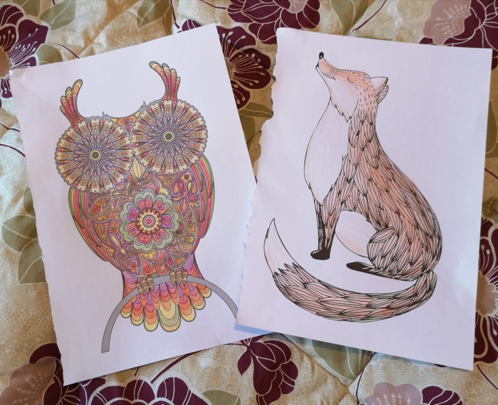 Pictures of an owl and a fox, laid out on my bed.