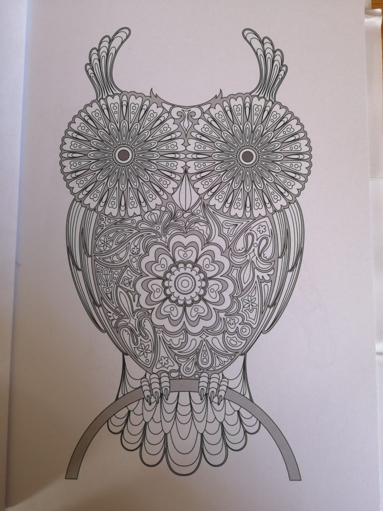 A picture of an owl to colour in