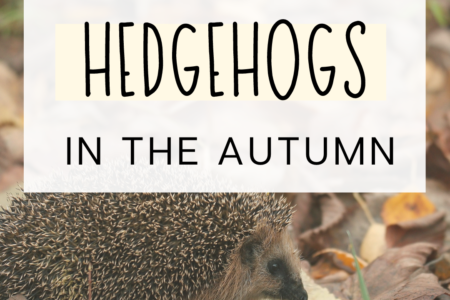How To Help Hedgehogs In The Autumn
