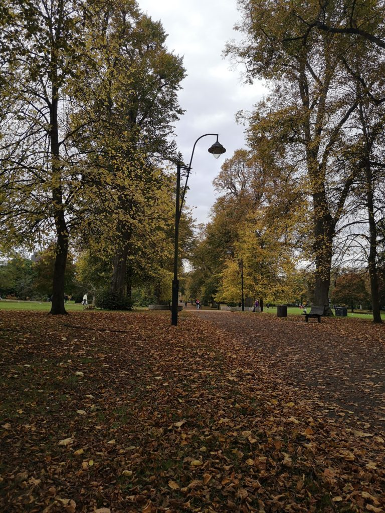 An Autumnal park - a path lined with yellow-leaved trees and strewn with brown leaves