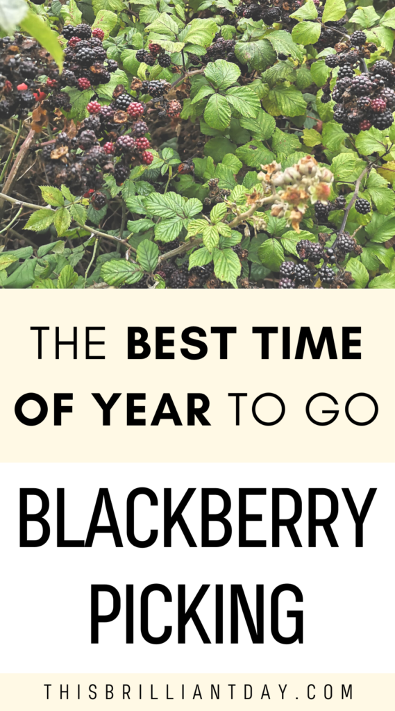 The best time of year to go blackberry picking