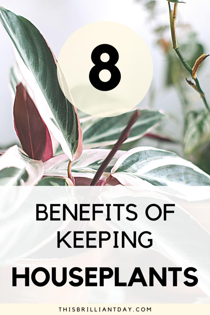 8 Benefits of Keeping Houseplants
