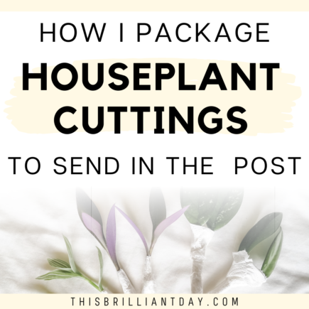 How I Package Houseplant Cuttings To Send In The Post