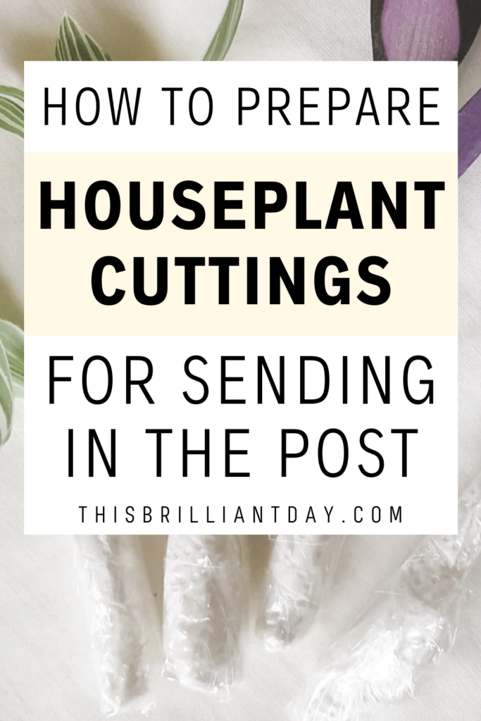 How To Prepare Houseplant Cuttings For Sending In The Post