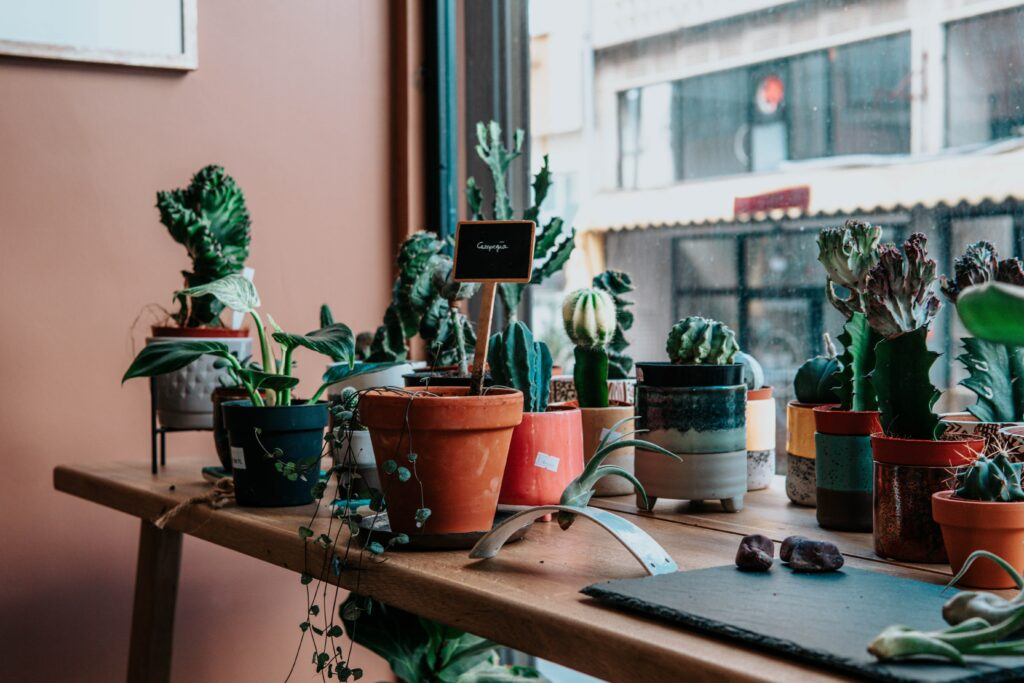 A selection of plants in coloured pots on a table.